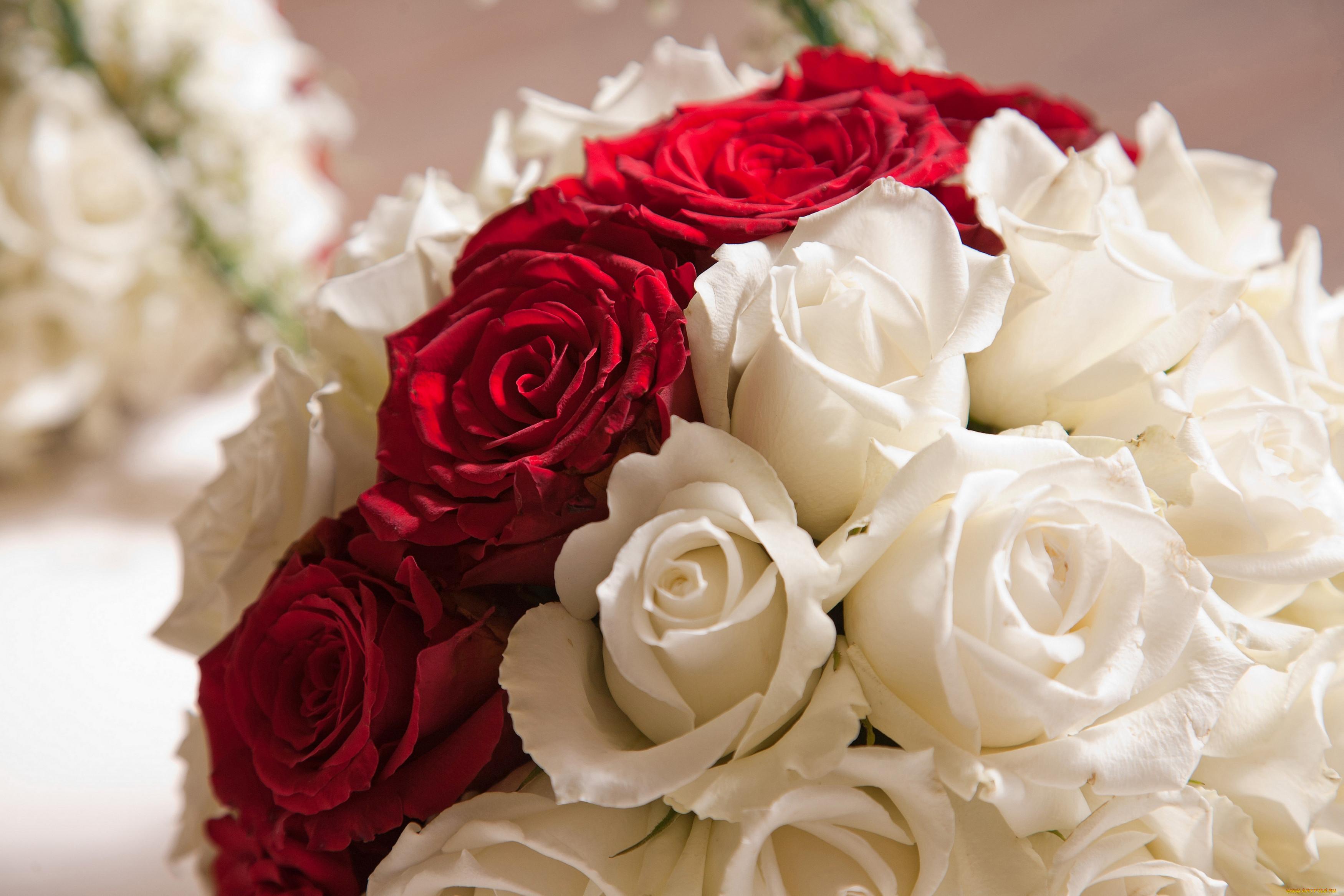 смотреть красивые картинки букетов роз знать